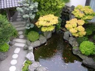 Vườn Nhật điểm nhấm là hồ cá koi