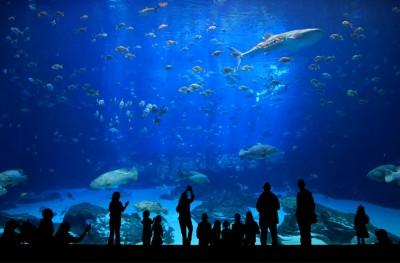 Thiết kế và Thi công bể cá tấm kính lớn