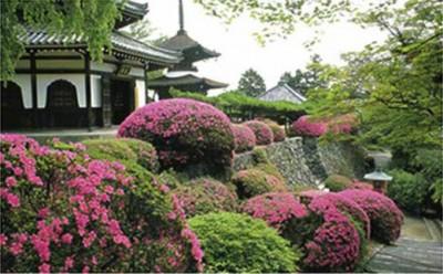 Một số điều cần lưu ý khi thiết kế vườn Nhật