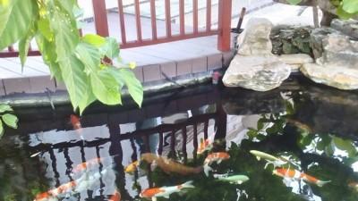 Ngắm hồ koi tuyệt đẹp tại Vinhomes  – Long Biên – Hà Nội
